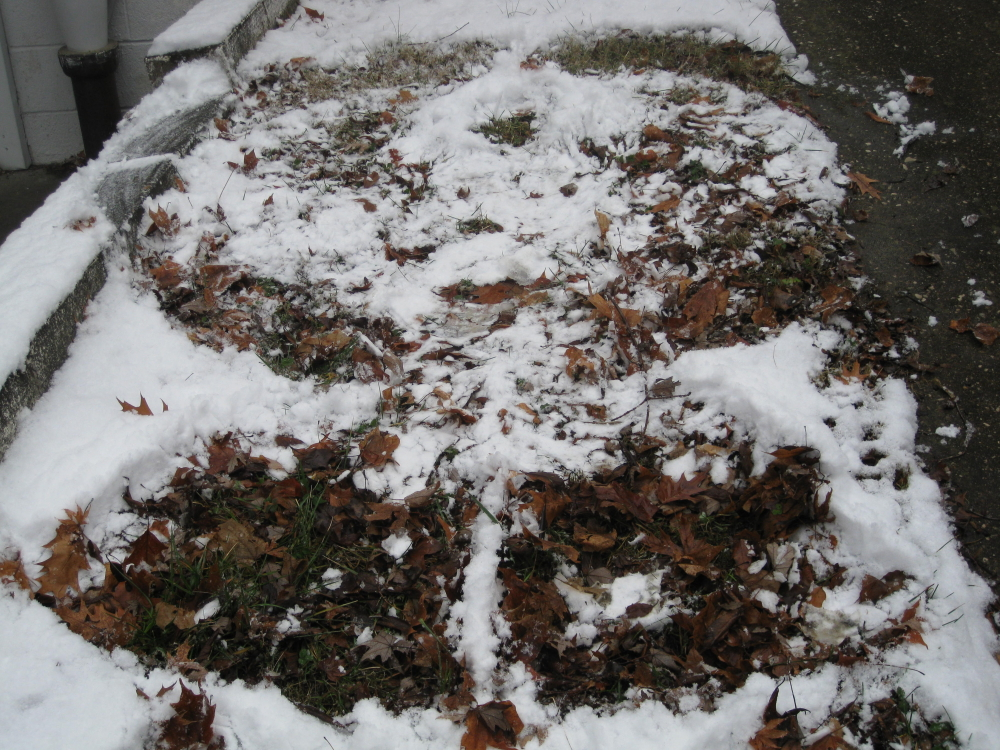 Snow angel created by Davonne Parks